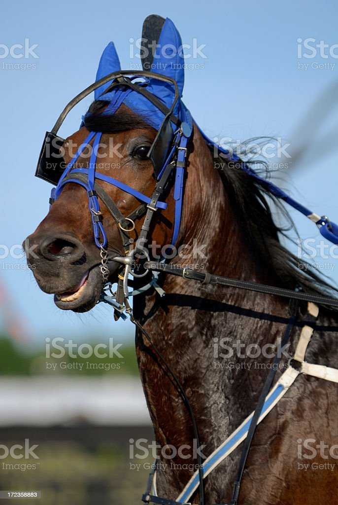 Harness horse Racing royalty-free stock photo