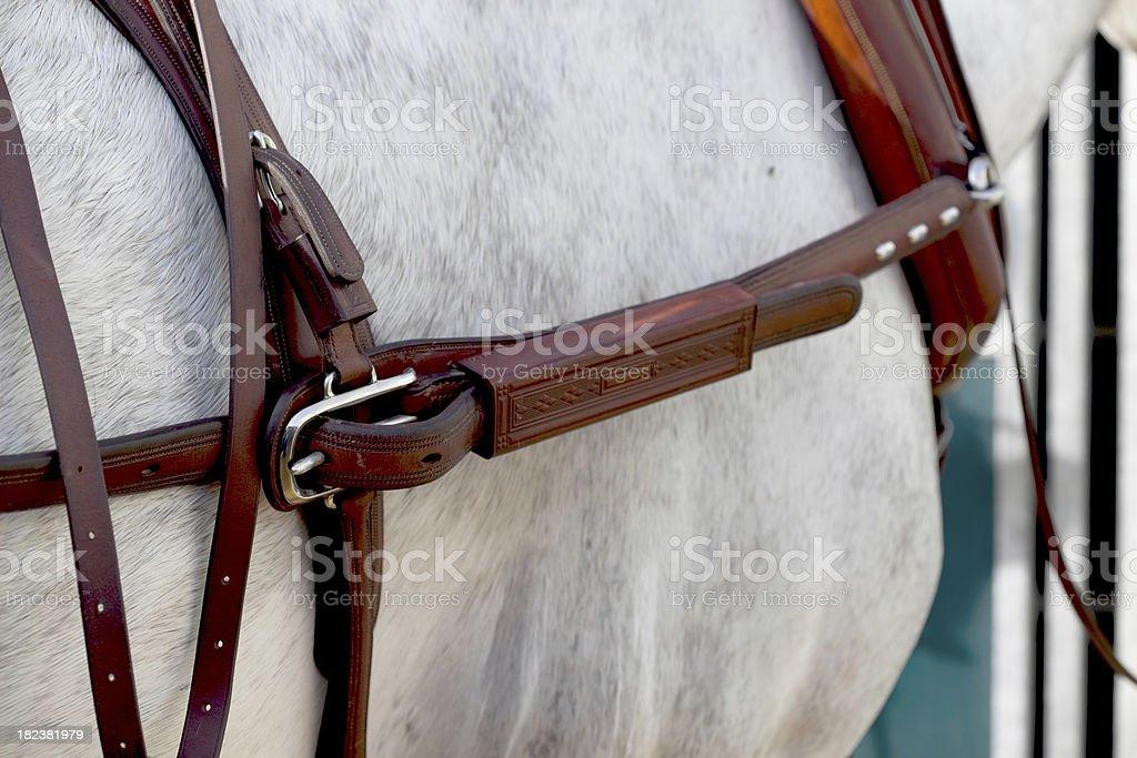 harness stock photo