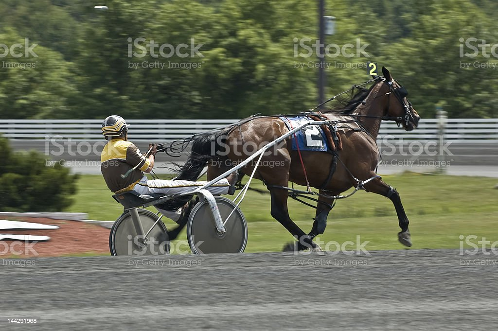 harness race stock photo