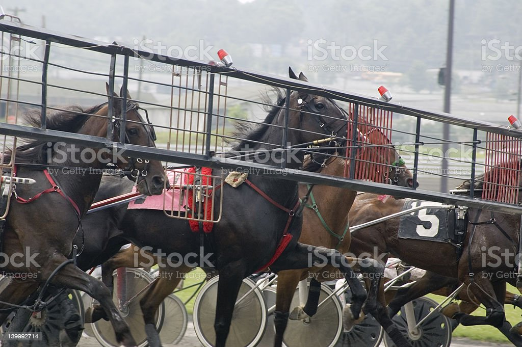 harness race-1 royalty-free stock photo