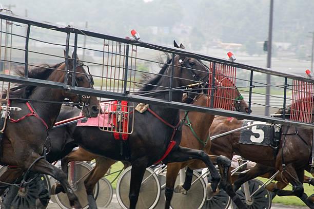 harness race-1 stock photo