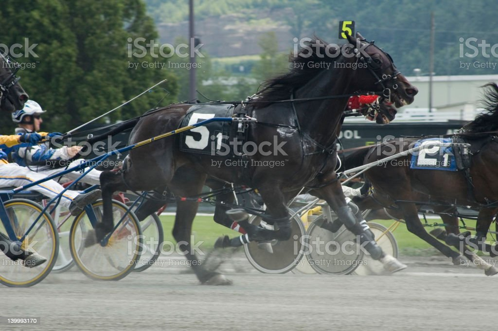 harness race-3 royalty-free stock photo