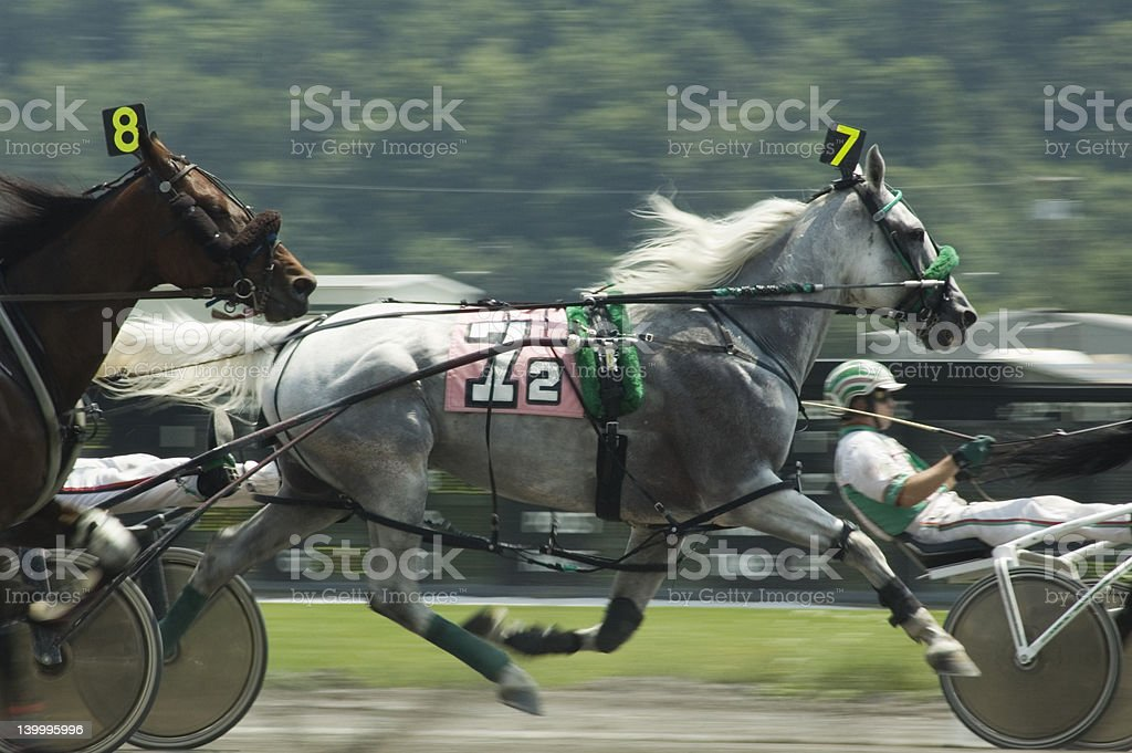 harness race-4 stock photo