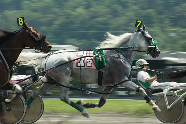 harness race-4 stock photo