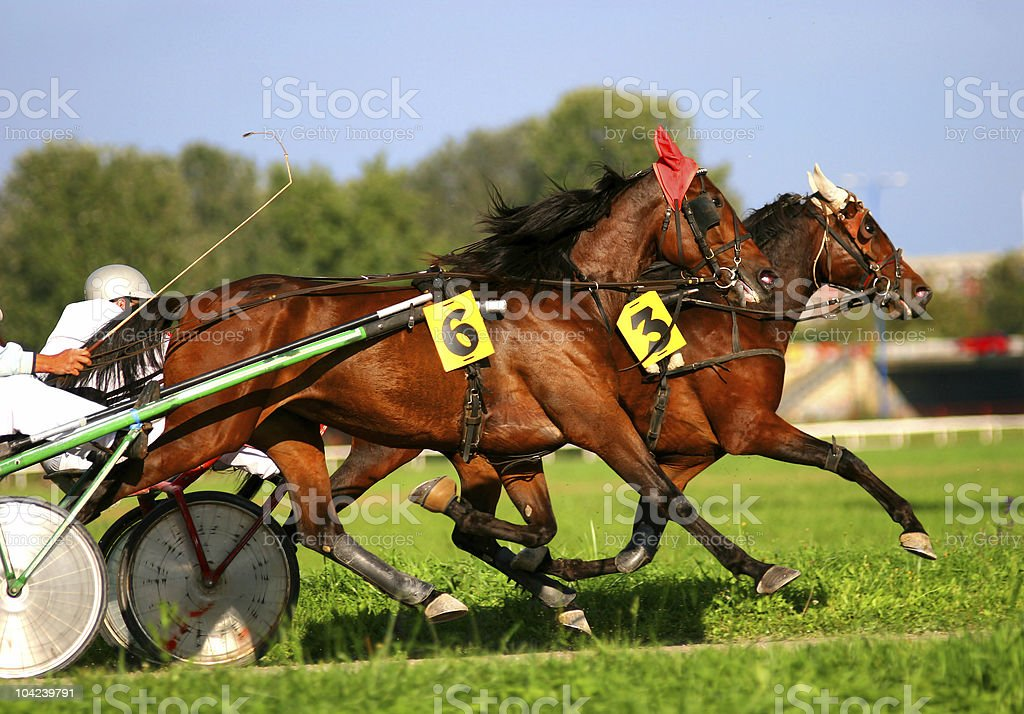Harness racing stock photo