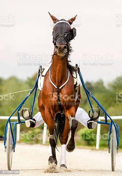 Harness racing picture id511031109?b=1&k=6&m=511031109&s=612x612&h=gpuors1wijtlic5lgegogbqvsxxp2micfoxw14m4a6k=