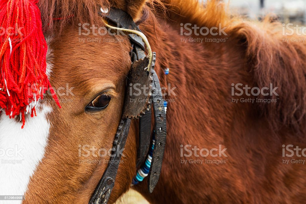 Harnessed horse with a red head decoration stock photo