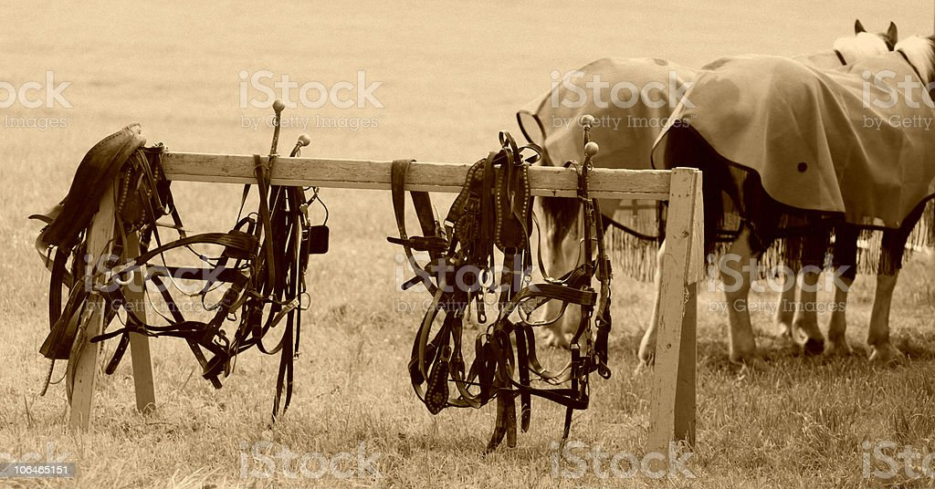Harnesses - Sepia royalty-free stock photo