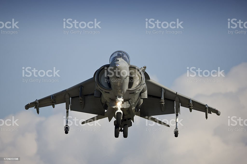 Harrier royalty-free stock photo