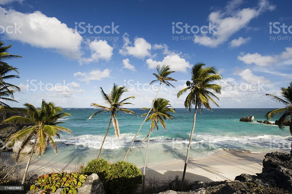 Harrismith Beach and Palm Trees on Barbados stock photo