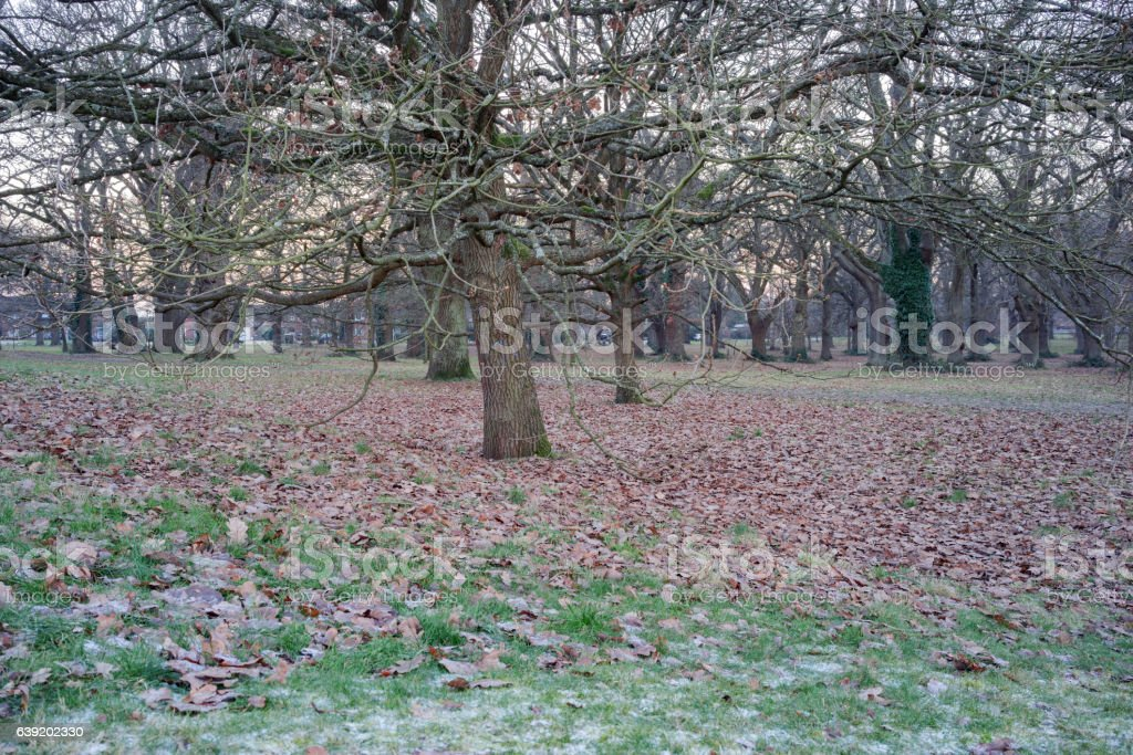 Hartley Wintney commons on a frosty winter's day stock photo