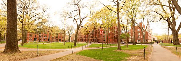 harvard yard - harvard university stock photos and pictures