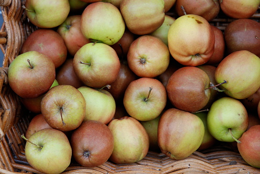 Harvest Apples Stock Photo - Download Image Now