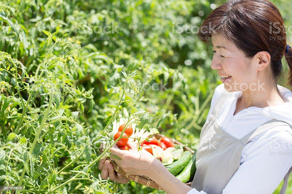 Harvesting vegetables at home gardenHarvesting vegetables at home...
