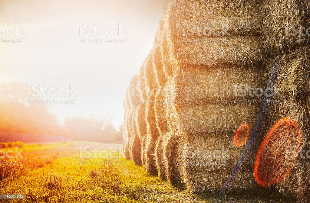 harvest bales of straw on sunset nature background stock photo