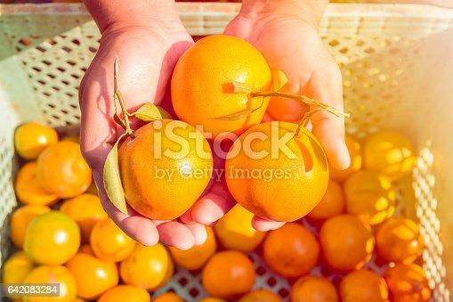 istock Harvest citrus fruits morning 642083284