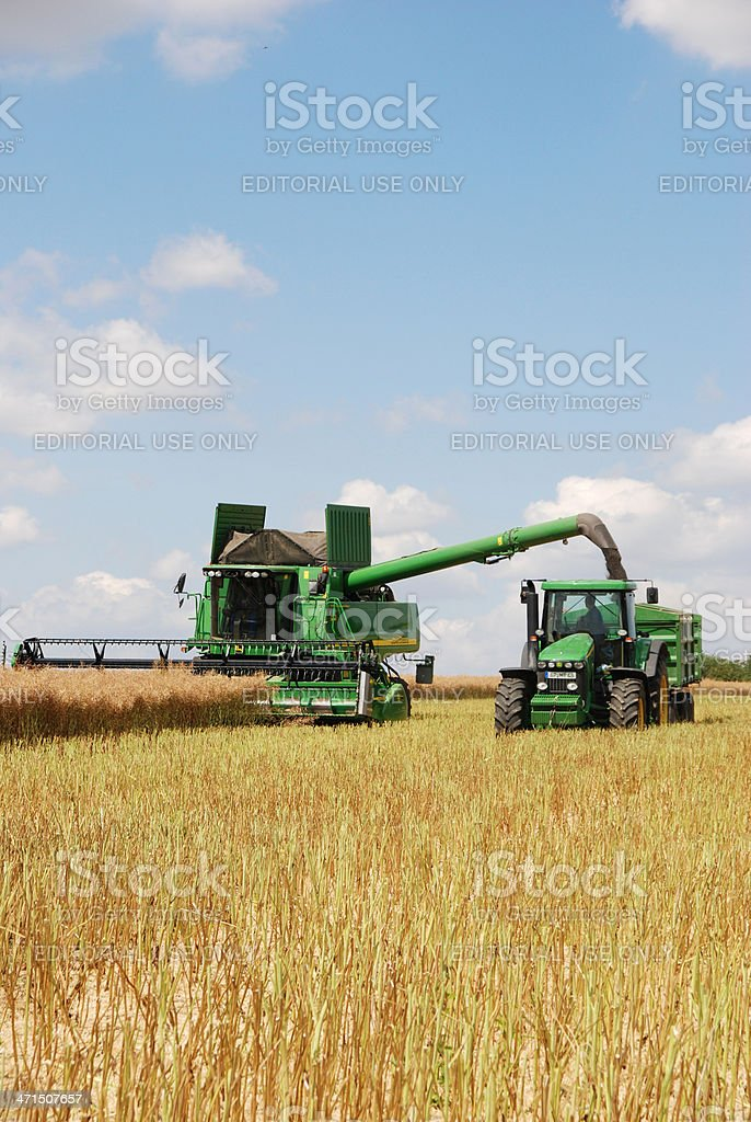 Harvest - combine at canola field stock photo
