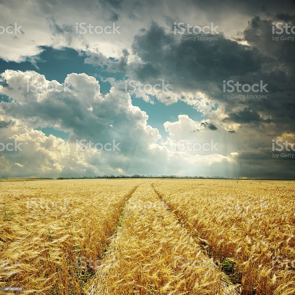 harvest field and low clouds over it royalty-free stock photo