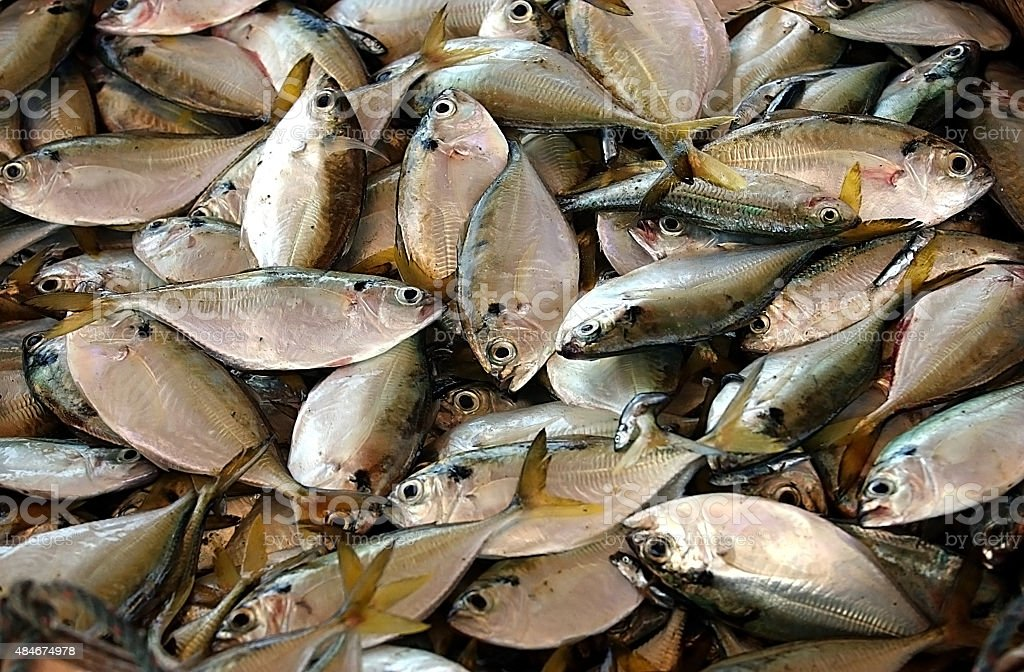Harvest fishes stock photo