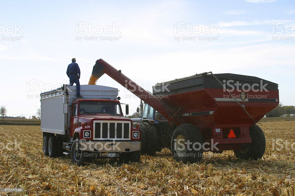 Harvest Hauling stock photo