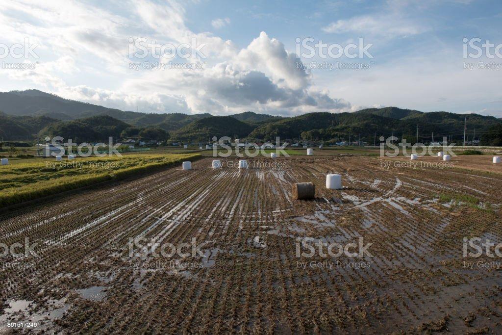 Harvest landscape after harvest stock photo