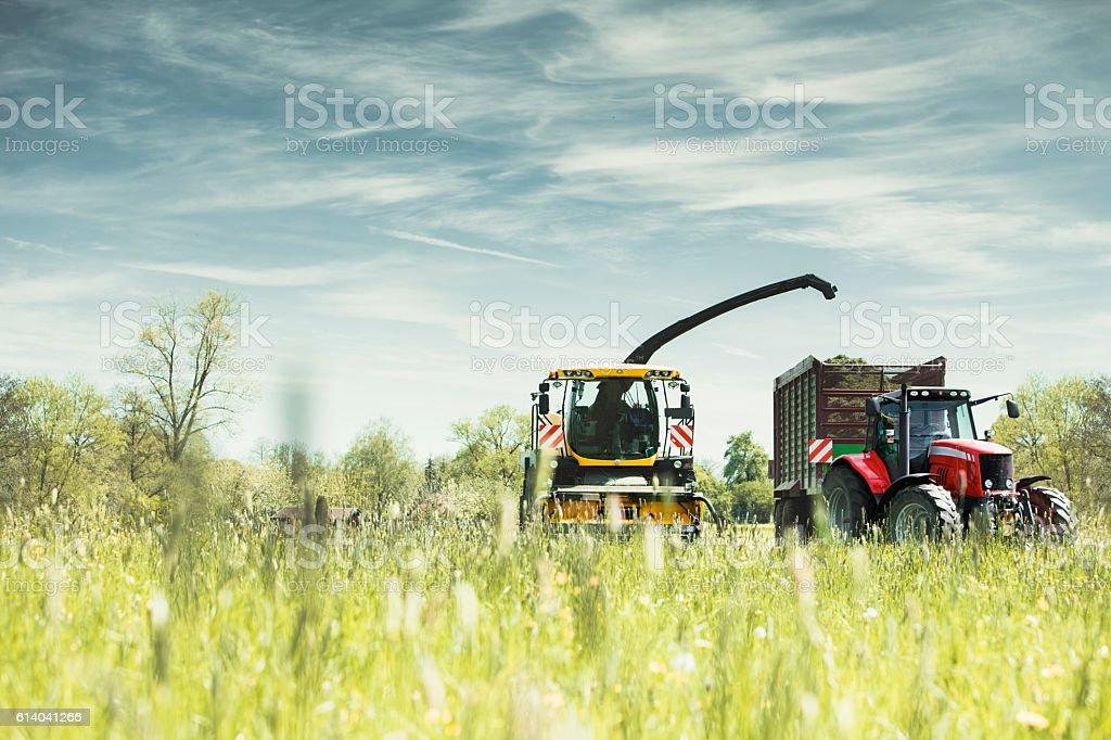 Harvest Landscape stock photo