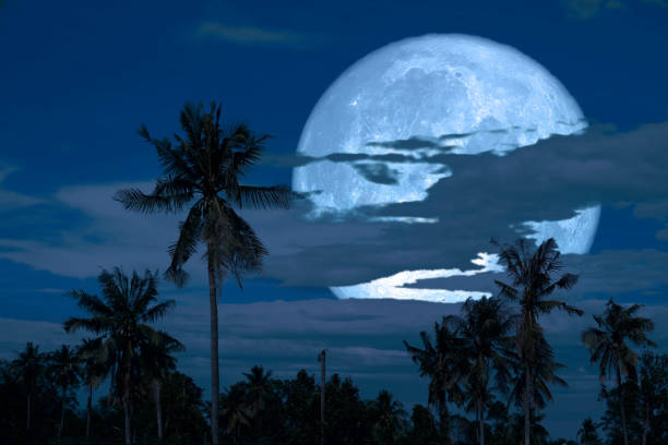 harvest moon on night sky back over silhouette coconut tree and cloud background stock photo