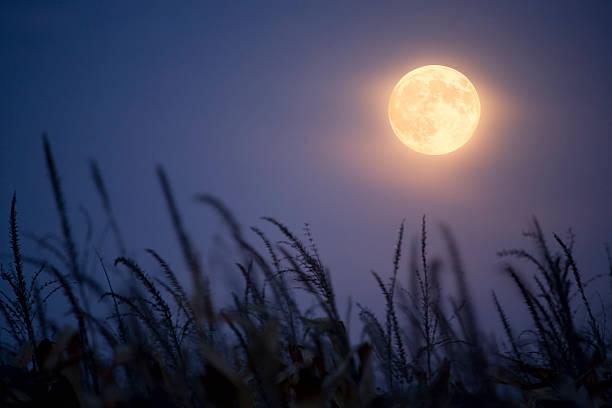 lune des moissons. - pleine lune photos et images de collection