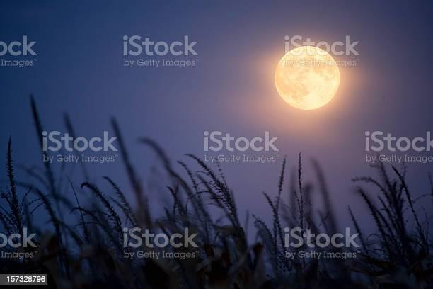 Photo of Harvest Moon.