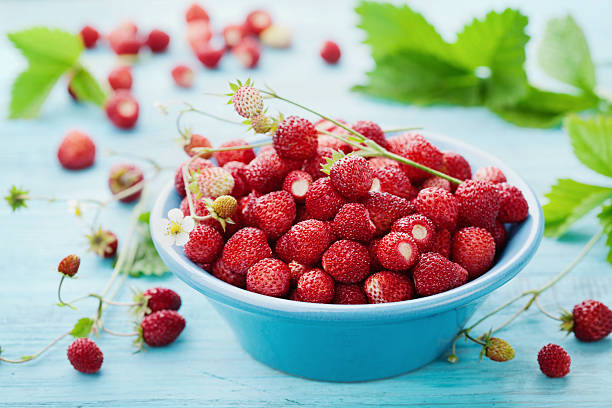 harvest of organic strawberry or fragaria, sweet summer dessert - wilde aardbei stockfoto's en -beelden