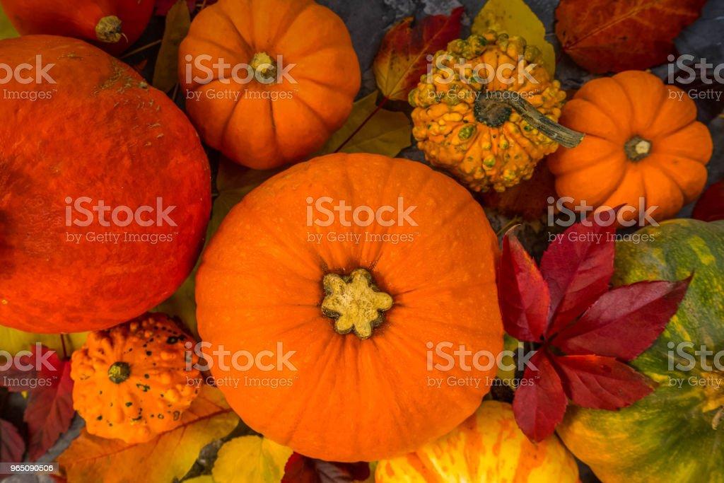 Harvest of pumpkins zbiór zdjęć royalty-free