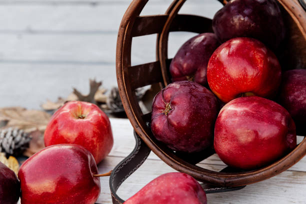Harvest of red apples in a basket in autumn season, fresh organic fruits on wooden background stock photo