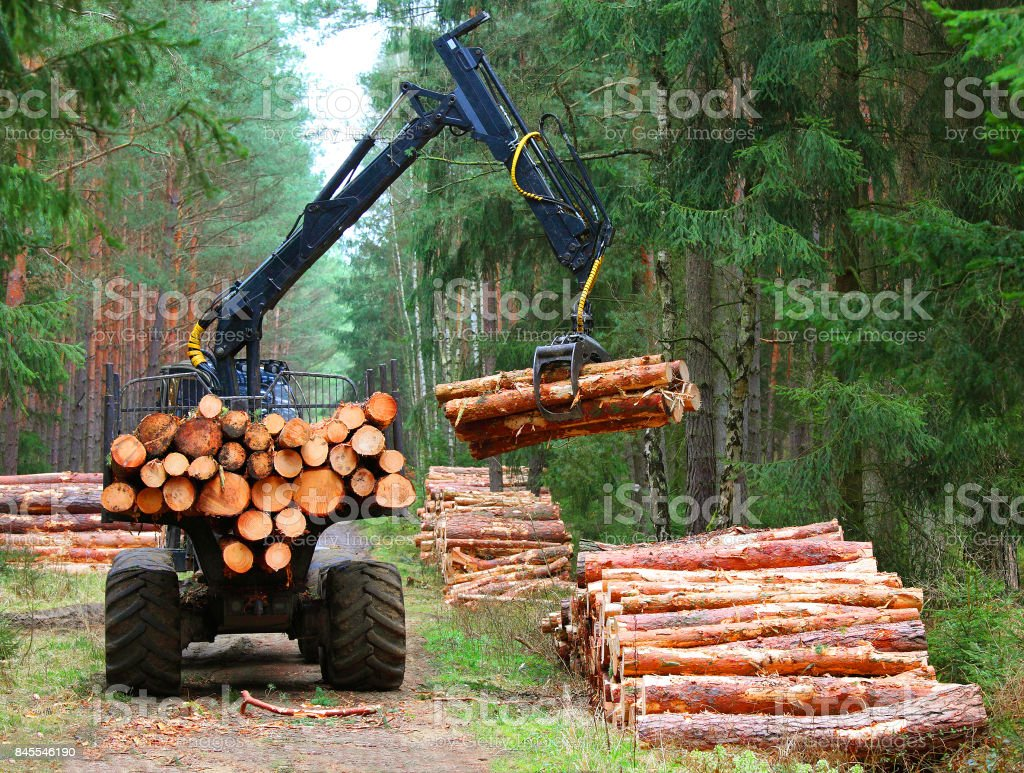 Ernte des Holzes. – Foto