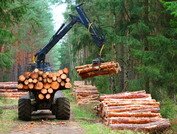 Harvest of timber. Lumberjack with modern harvester working in a forest. Wood as a source renewable energy. Lumber industry theme. lumberjack stock pictures, royalty-free photos & images