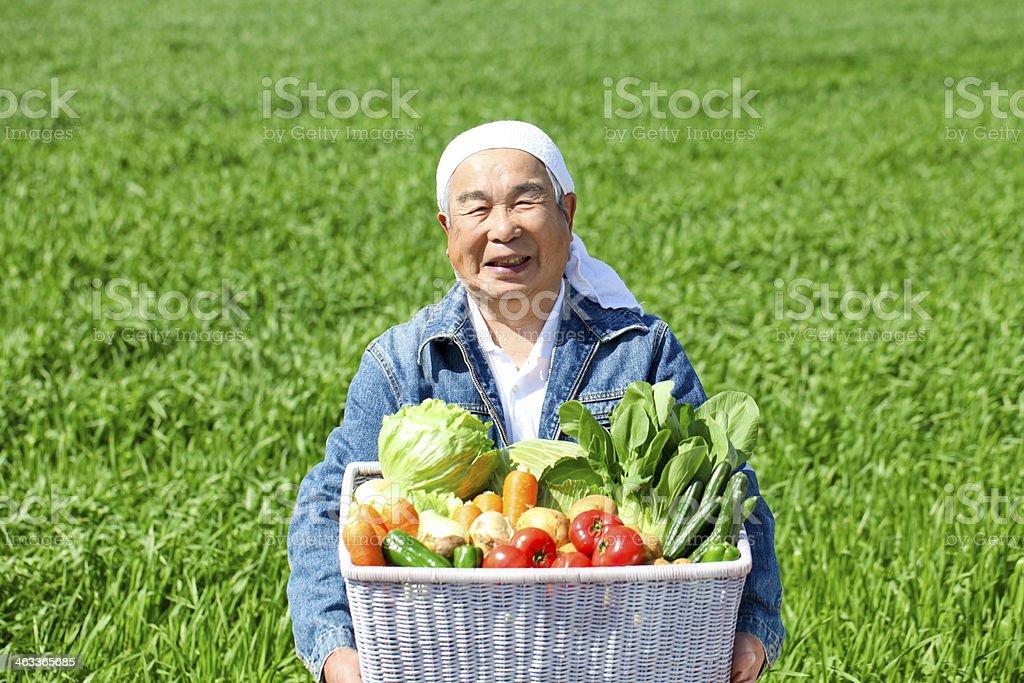 Colheita de legumes - foto de acervo