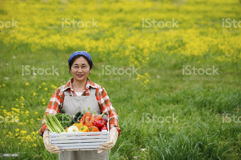 Harvest of vegetables royalty-free stock photo