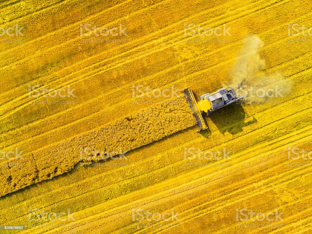 Harvest of wheat field. stock photo