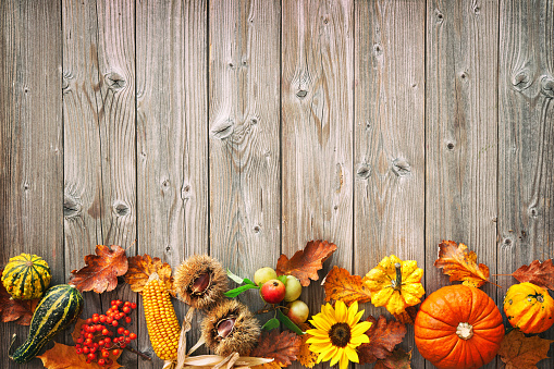 istock Harvest or Thanksgiving background with autumnal leaves, fruits and gourds 1026012894