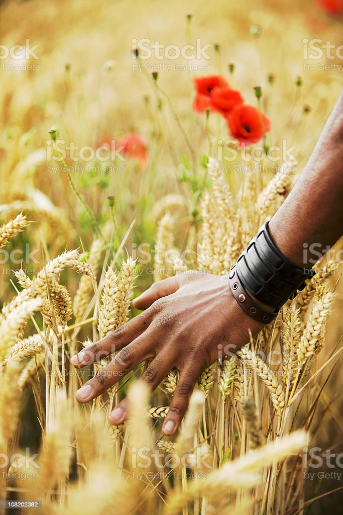 harvest royalty-free stock photo