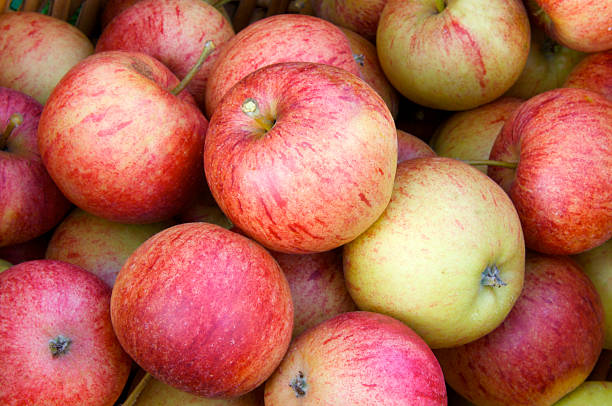 Harvest Close up of freshly picked apples, orchards, Kent, England, UK. apple orchard stock pictures, royalty-free photos & images