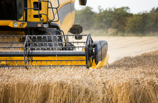 harvester cutting wheat,, motion blur on the forks and wheat
