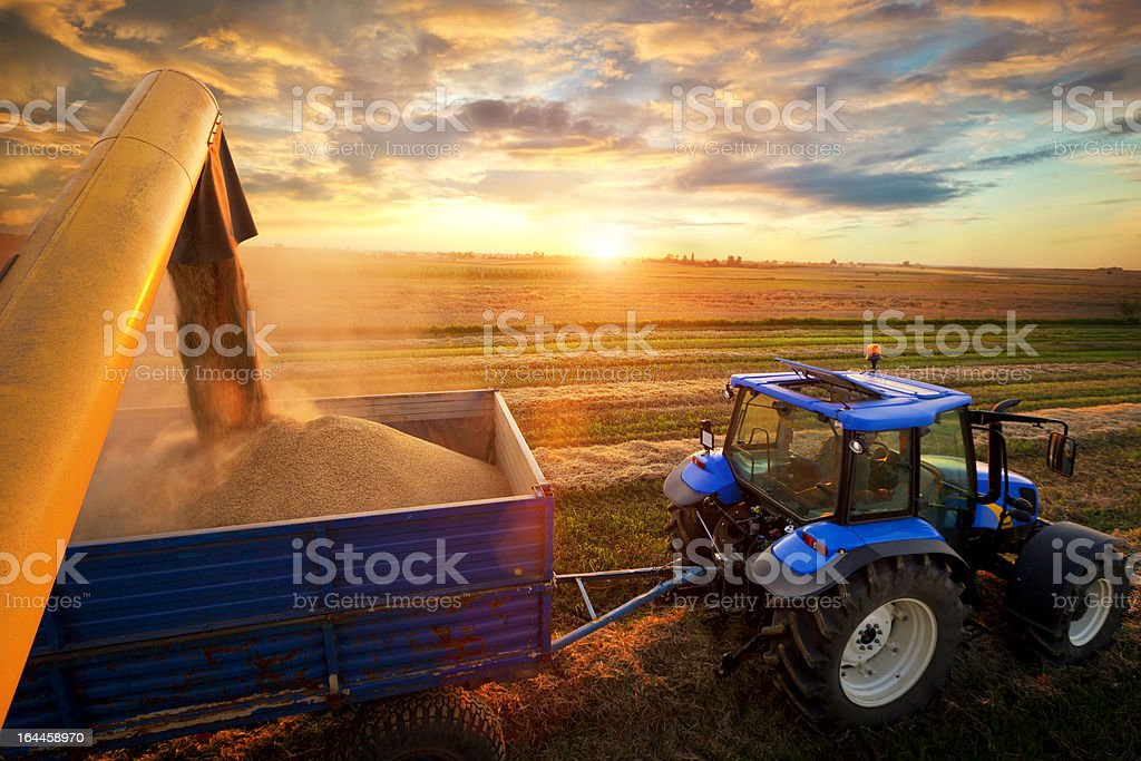 Harvest stock photo