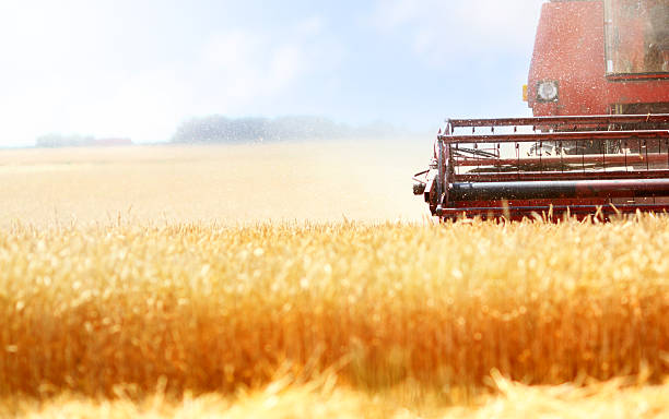 Harvest Wheat harvest in progress.Selective focus on front section of a combine machine oat crop stock pictures, royalty-free photos & images