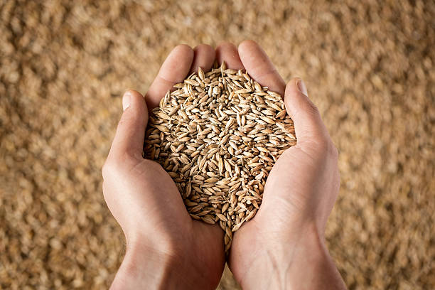 Harvest Close up of cupped farmer's hands full of grain handful stock pictures, royalty-free photos & images