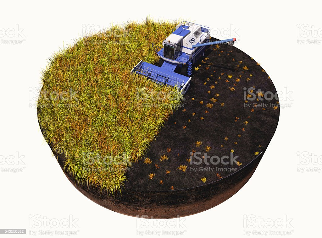 Harvest. stock photo