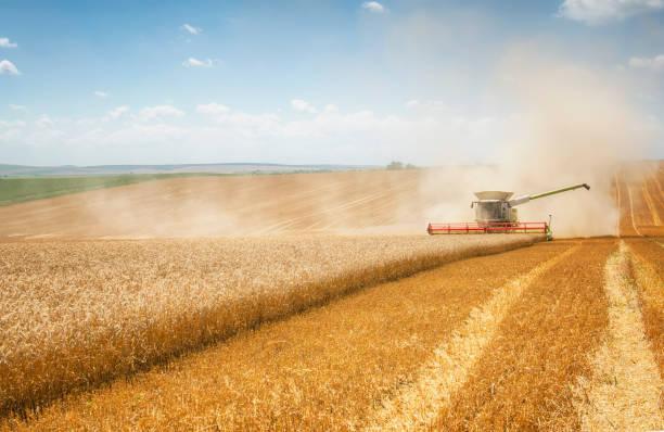 harvest - zbierać plony zdjęcia i obrazy z banku zdjęć