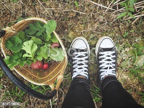 Harvest radishes on a basket