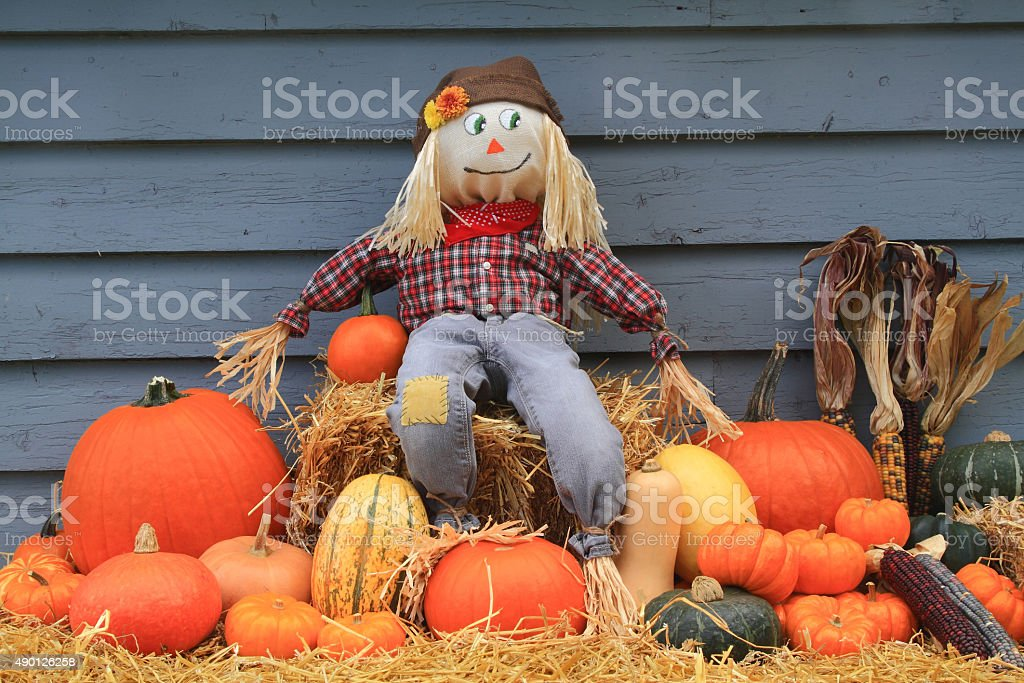 Harvest, Thanksgiving and Scarecrow stock photo