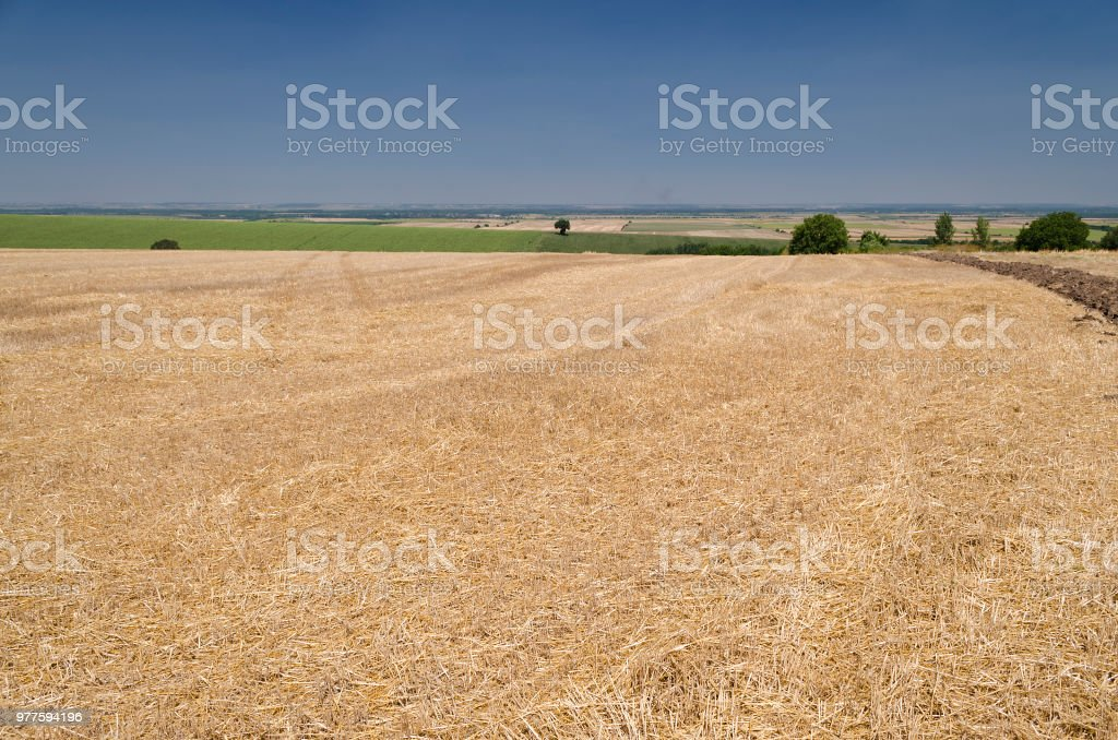 Harvest time in the fields of northern Bulgaria stock photo