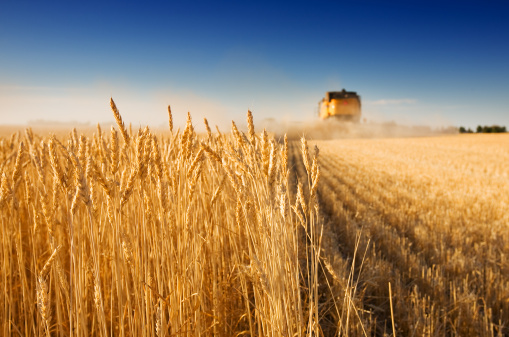 Harvest Time Stock Photo - Download Image Now